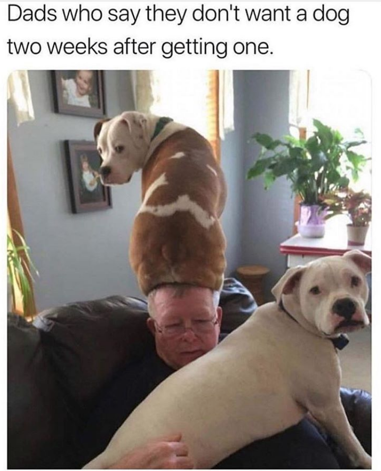 Dog - Dads who say they don't want a dog two weeks after getting one.