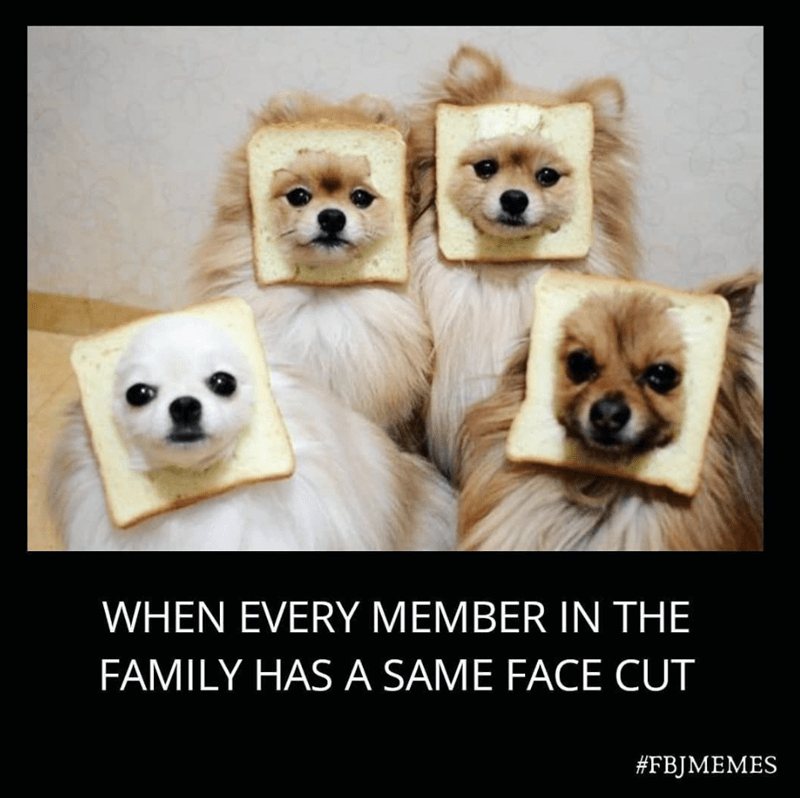 Mammal - WHEN EVERY MEMBER IN THE FAMILY HAS A SAME FACE CUT #FBJMEMES