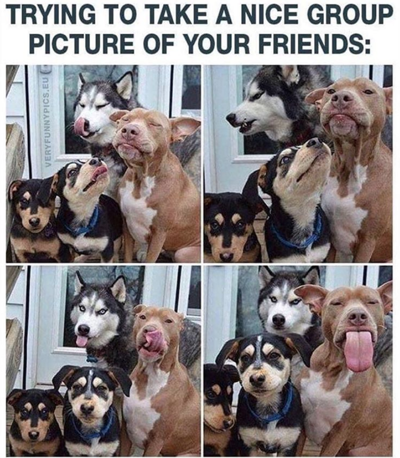 Dog - TRYING TO TAKE A NICE GROUP PICTURE OF YOUR FRIENDS: VERYFUNNYPICS.EU