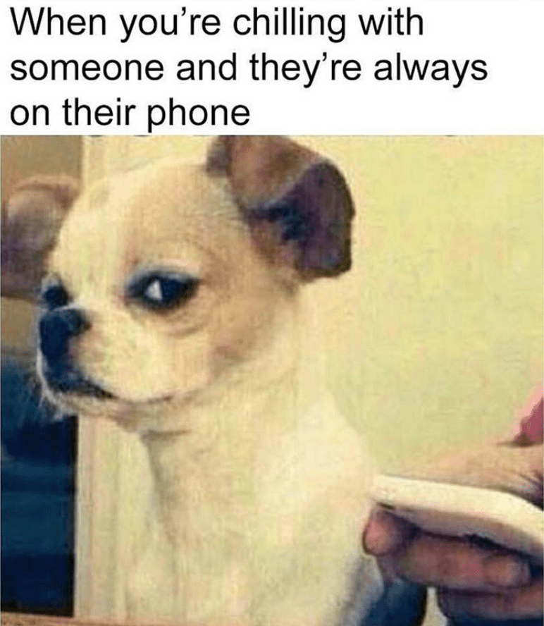 Dog - When you're chilling with someone and they're always on their phone