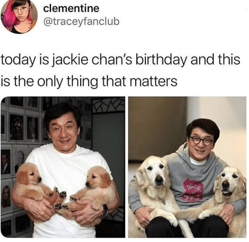 Dog breed - clementine @traceyfanclub today is jackie chan's birthday and this is the only thing that matters