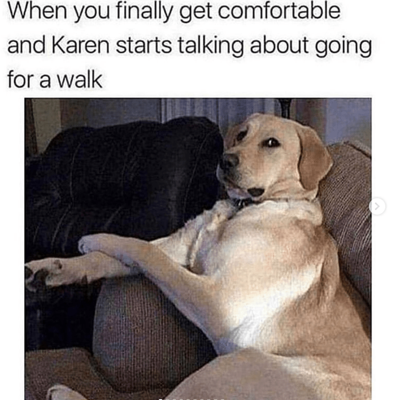 Dog - When you finally get comfortable and Karen starts talking about going for a walk