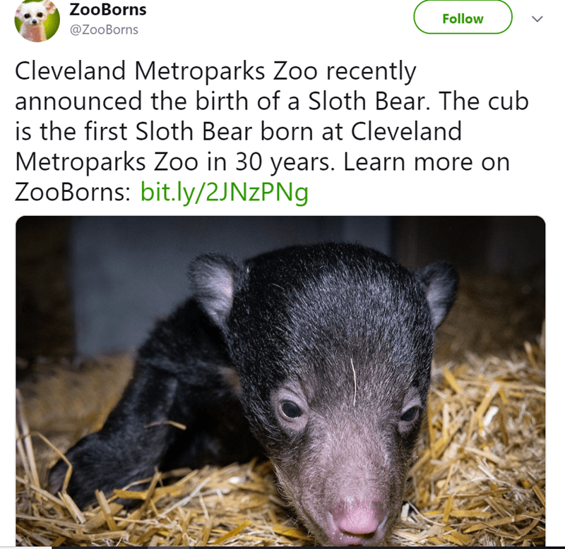 Adaptation - ZooBorns Follow @ZooBorns Cleveland Metroparks Zoo recently announced the birth of a Sloth Bear. The cub is the first Sloth Bear born at Cleveland Metroparks Zoo in 30 years. Learn more on ZooBorns: bit.ly/2JNZPN9 >