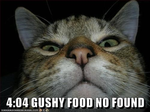 Cat - 4:04 GUSHY FOOD NO FOUND ICANHASCHEEZBURGER.OOM