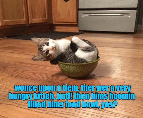 Cat - Wonce upon a tiem, ther wera very hungry kitteh, butt! then hims hoomin filled hims food bowl, yes?