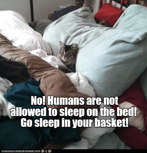 Cat - No! Humans are not allowed to sleep on the bed! Go sleep in your basket! IOANHASOHEEZBURGER.OOM