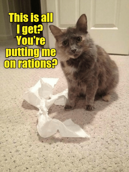 Cat - This is all I get? You're putting me on rations?