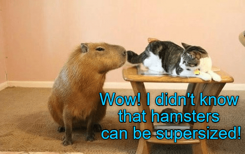 Mammal - Wow!I didn't know that hamsters can be supersized!