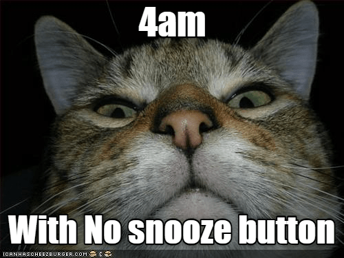 Cat - 4am With No snooze button cANHASCHEE2EURGER COM