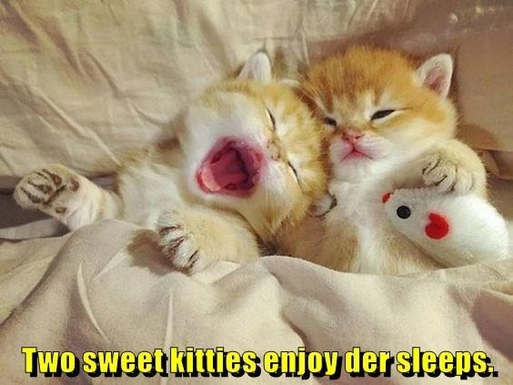 Cat - TWO SWeetkittiesenjoy der sleeps