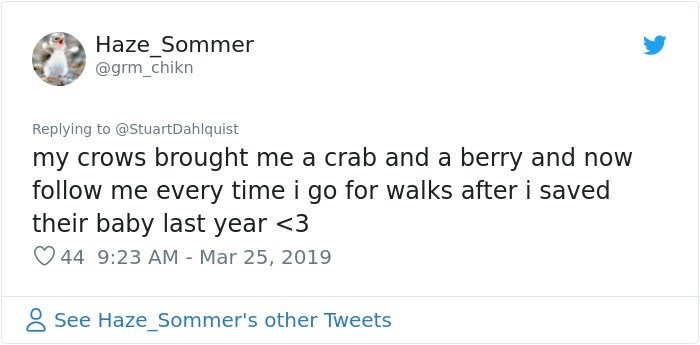 Text - Haze Sommer @grm_chikn Replying to @StuartDahlquist my crows brought me a crab and a berry and now follow me every time i go for walks after i saved their baby last year <3 44 9:23 AM - Mar 25, 2019 See HazeSommer's other Tweets