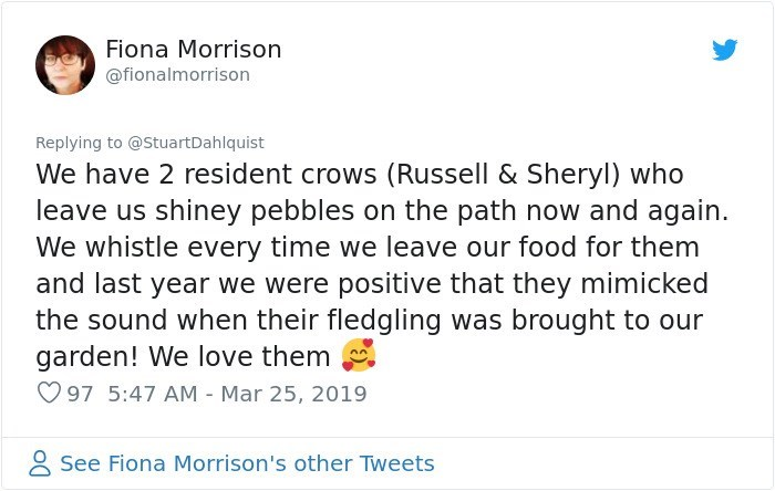 Text - Fiona Morrison @fionalmorrison Replying to @StuartDahlquist We have 2 resident crows (Russell & Sheryl) who leave us shiney pebbles on the path now and again We whistle every time we leave our food for them and last year we were positive that they mimicked the sound when their fledgling was brought to our garden! We love them 97 5:47 AM - Mar 25, 2019 See Fiona Morrison's other Tweets