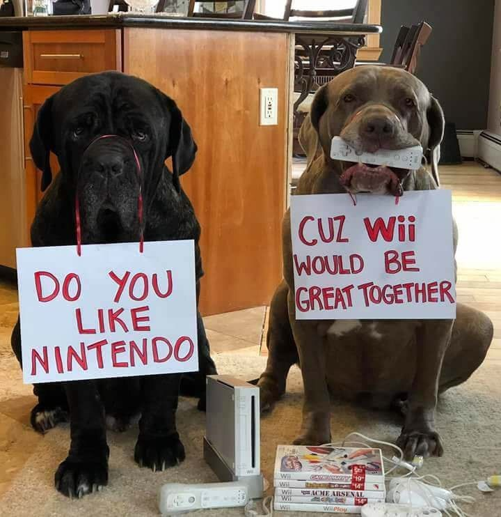 Dog - CUZ Wii WOULD BE GREAT TOGETHER DO YOU LIKE NINTENDO C Wil 19 14 ACME ARSENAL Wil Wil Wit Wi WiPlou