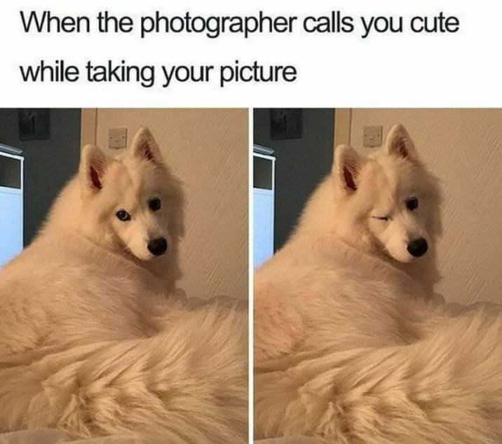 Mammal - When the photographer calls you cute while taking your picture