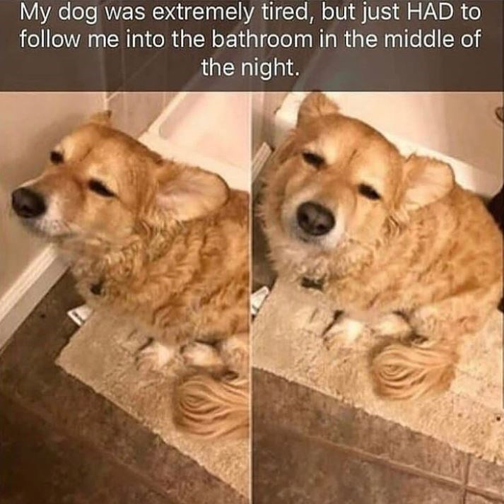 Dog breed - My dog was extremely tired, but just HAD to follow me into the bathroom in the middle of the night.