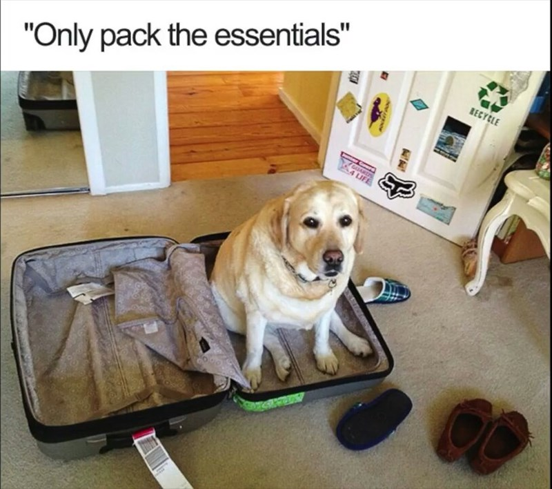 """Dog - RECYCLE """"Only pack the essentials"""" GUARS 4 LIFE APKNO"""