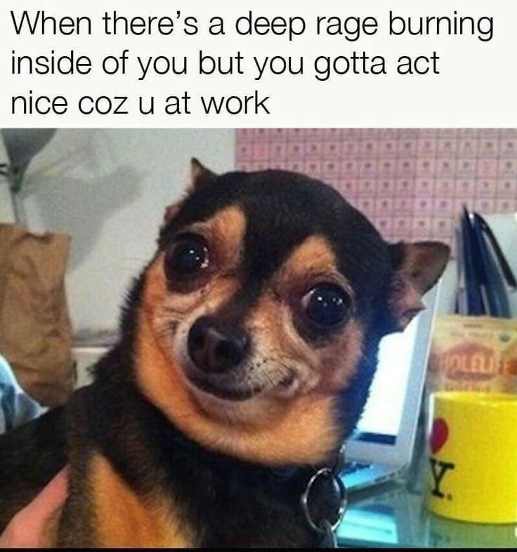 Dog - When there's a deep rage burning inside of you but you gotta act nice coz u at work HOLEL Y.