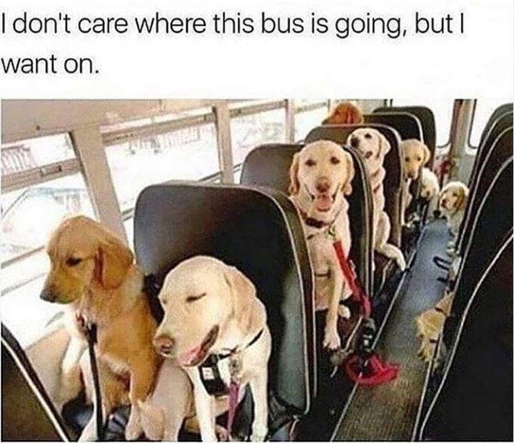 Dog - I don't care where this bus is going, but I want on.