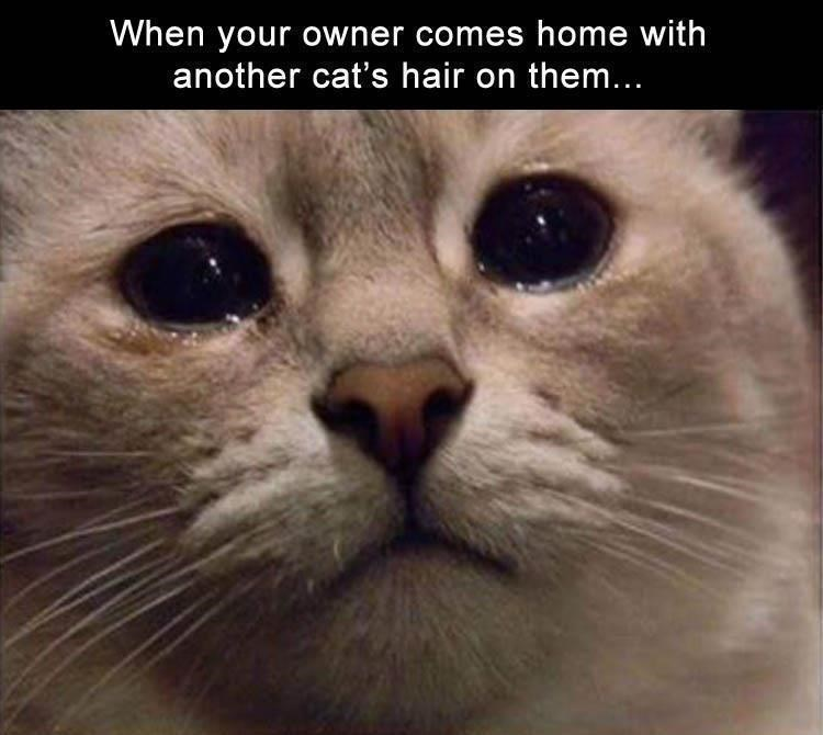Cat - When your owner comes home with another cat's hair on them..