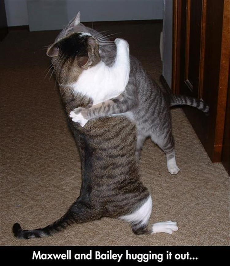 Cat - Maxwell and Bailey hugging it out...