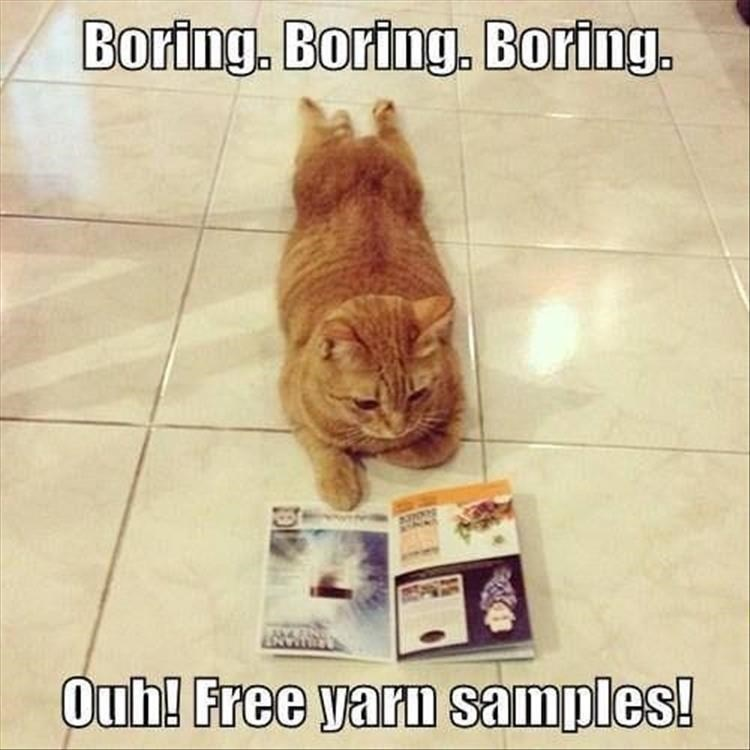 Cat - Boring. Boring. Boring. EN Ouh! Free yarn samples!