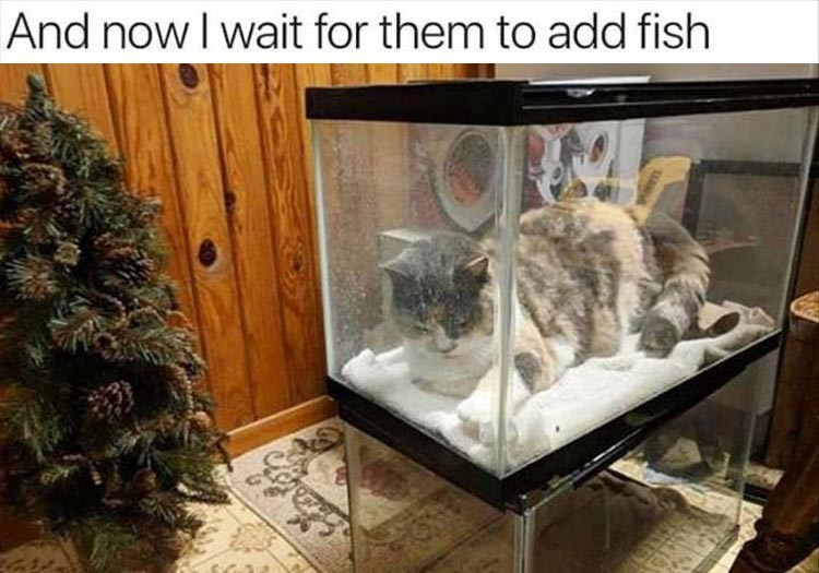 Cat - And now I wait for them to add fish