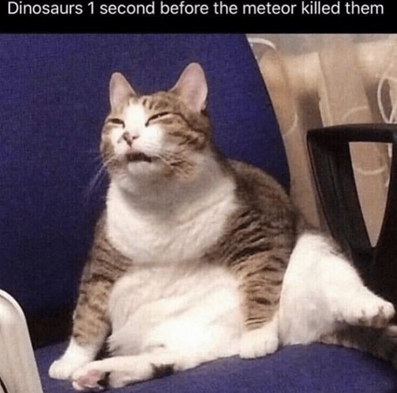 Cat - Dinosaurs 1 second before the meteor killed them