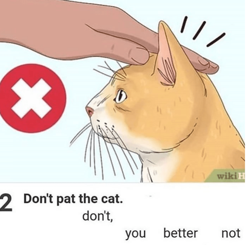Cat - wiki H 2 Don't pat the cat. don't, better not you