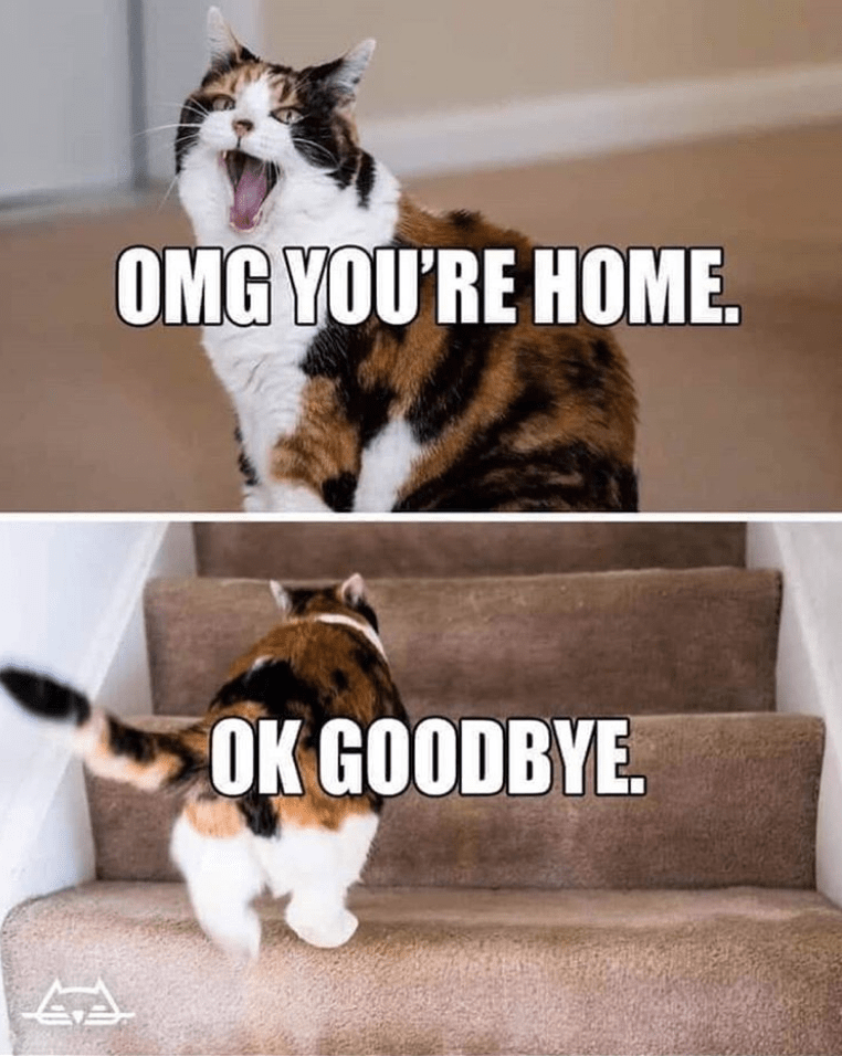 Cat - OMG YOU'RE HOME OK GOODBYE