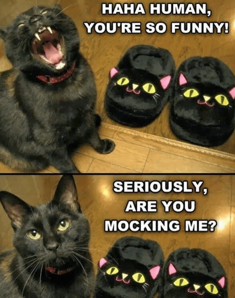 Cat - HAHA HUMAN, YOU'RE SO FUNNY! SERIOUSLY ARE YOU MOCKING ME?