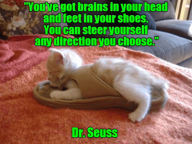 "cat meme - Cat - ""You've got brains in your head and feet in your shoes. You can steer yourself any direction you choose."" Dr. Seuss"