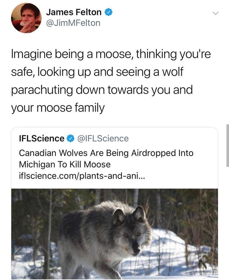 Wildlife - James Felton @JimMFelton Imagine being a moose, thinking you're safe, looking up and seeing a wolf parachuting down towards you and your moose family IFLScience @IFLScience Canadian Wolves Are Being Airdropped Into Michigan To Kill Moose iflscience.com/plants-and-ani...