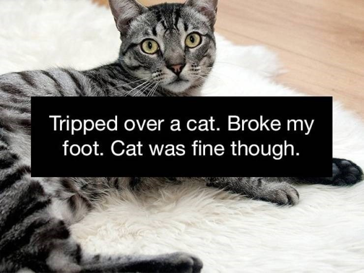 Cat - Tripped over a cat. Broke my foot. Cat was fine though.