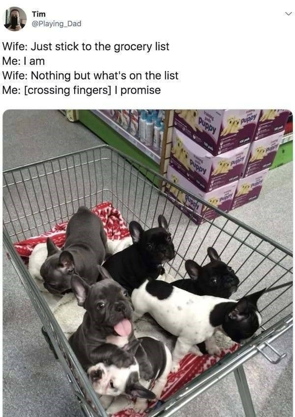 Dog - Tim @Playing Dad Wife: Just stick to the grocery list Me: I am Wife: Nothing but what's on the list Me: [crossing fingers] I promise tsie puppy Addnd pry