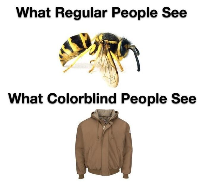 "Text that reads, ""What regular people see"" about a pic of a yellow jacket above text that reads, ""What colorblind people see"" above a pic of a brown jacket"