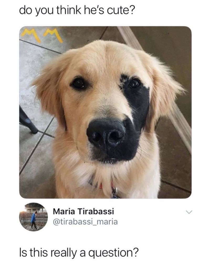 Dog - do you think he's cute? Maria Tirabassi @tirabassi_maria Is this really a question?