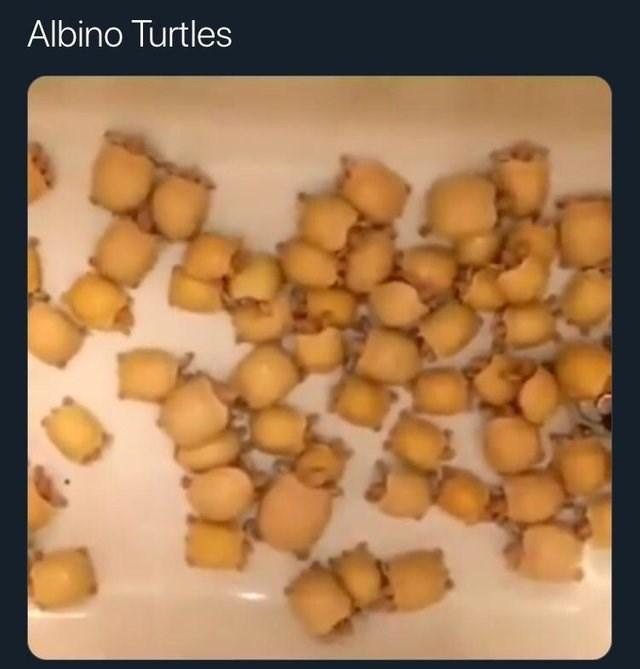 forbidden snack - Food - Albino Turtles