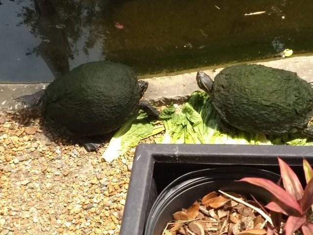 forbidden snack - Turtle