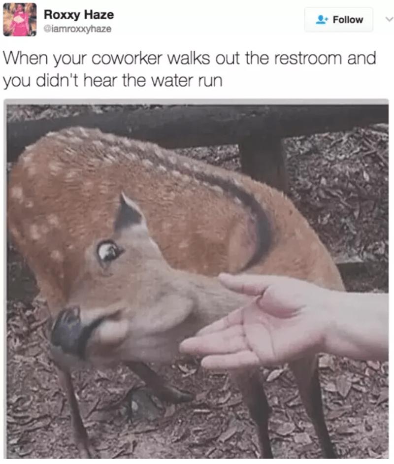 work meme - Wildlife - Roxxy Haze Ciamroxxyhaze Follow When your coworker walks out the restroom and you didn't hear the water run