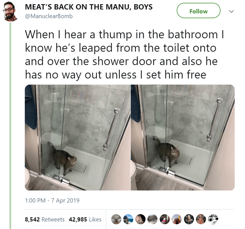 MEAT'S BACK ON THE MANU, BOYS Follow @ManuclearBomb When I hear a thump in the bathroom l know he's leaped from the toilet onto and over the shower door and also he has no way out unless I set him free 1:00 PM 7 Apr 2019 8,542 Retweets 42,985 Likes RU6
