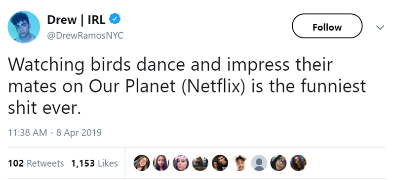 Text - Drew | IRL Follow @DrewRamosNYC Watching birds dance and impress their mates on Our Planet (Netflix) is the funniest shit ever. 11:38 AM - 8 Apr 2019 102 Retweets 1,153 Likes