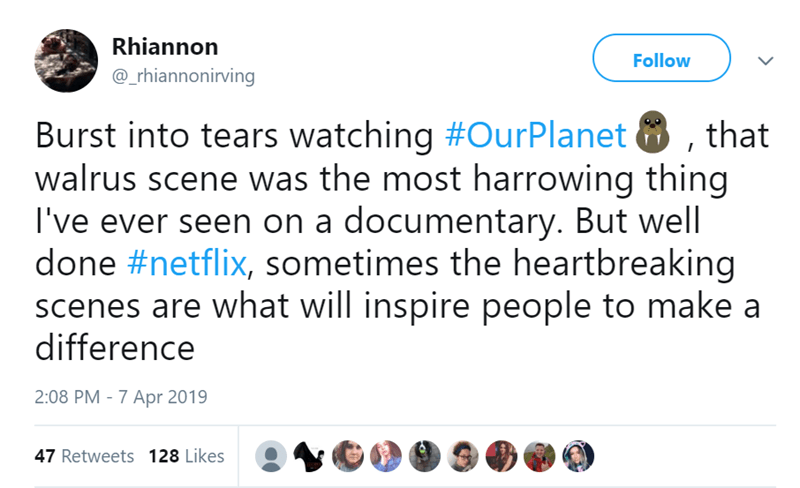 Text - Rhiannon Follow @_rhiannonirving Burst into tears watching #OurPlanet walrus scene was the most harrowing thing I've ever seen on a documentary. But well done #netflix, sometimes the heartbreaking scenes are what will inspire people to make a difference that 2:08 PM -7 Apr 2019 47 Retweets 128 Likes