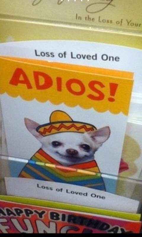 Funny pic about loss of a loved one, chihuahua.