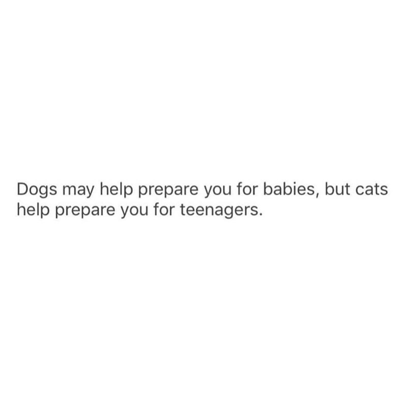 Text - Dogs may help prepare you for babies, but cats help prepare you for teenagers.
