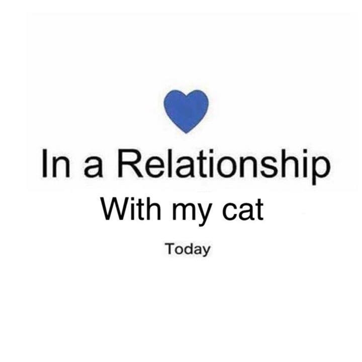 Text - In a Relationship With my cat Today