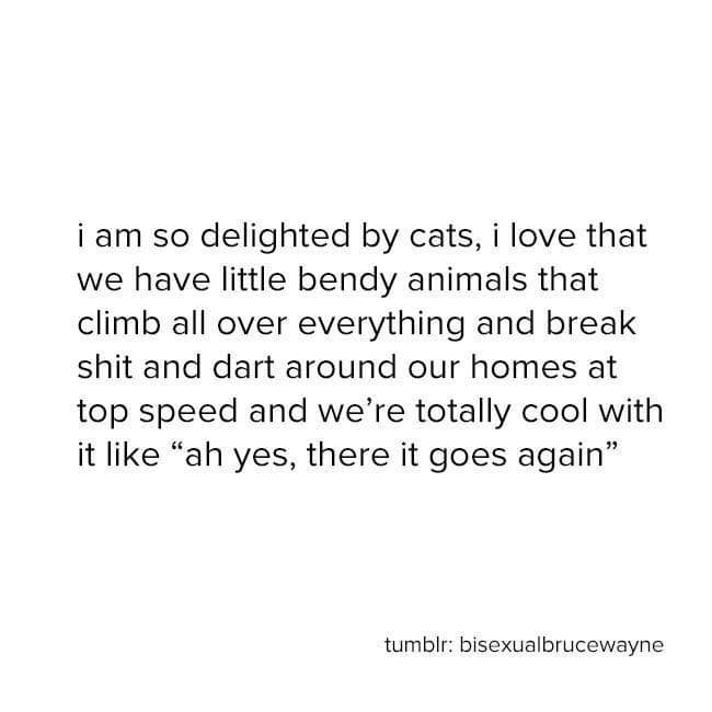 """Text - i am so delighted by cats, i love that we have little bendy animals that climb all over everything and break shit and dart around our homes at top speed and we're totally cool with it like """"ah yes, there it goes again"""" tumblr: bisexualbrucewayne"""