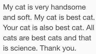 Text - My cat is very handsome and soft. My cat is best cat. Your cat is also best cat. All cats are best cats and that is science. Thank you.