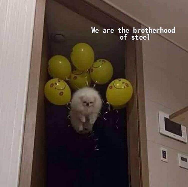 meme - Yellow - We are the brotherhood of steel