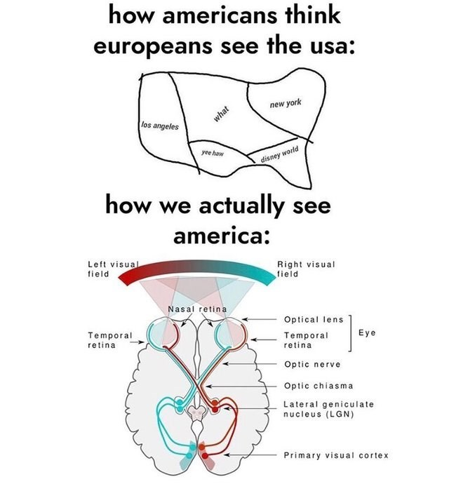 literal joke - Text - how americans think europeans see the usa: york new los angeles yee haw disney world how we actually see america: Right visual field Left visual field Nasal retina Optical lens Eye Temporal retina Temporal retina Optic nerve Optic chiasma Lateral geniculate nucleus (LGN) Primary visual cortex what