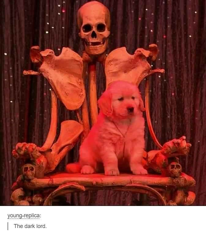 """Tumblr caption that reads, """"The dark lord"""" below a pic of a little puppy sitting in a skull chair"""